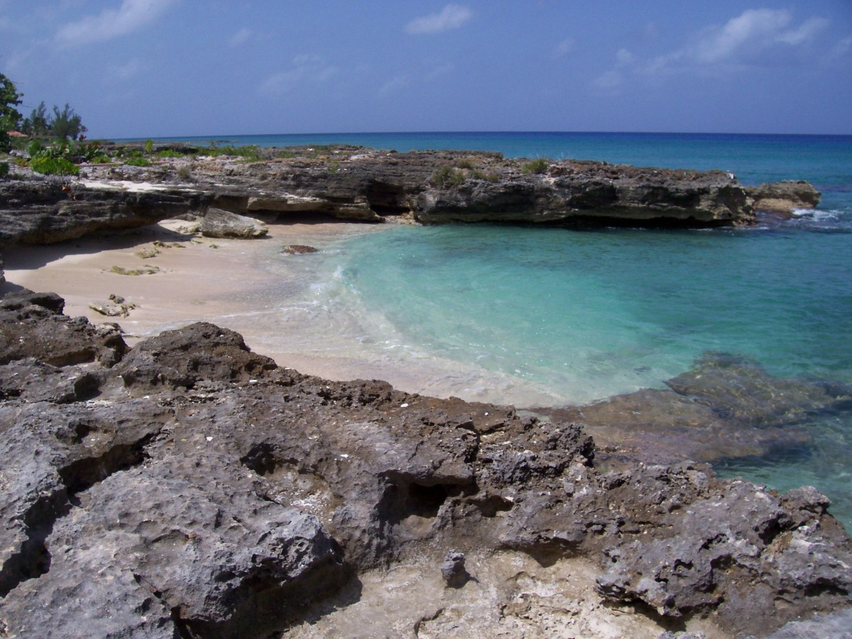 Eco Chic Cayman Is Now On Bloglovin