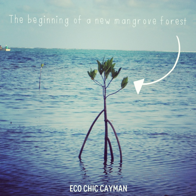 mangroves photo1