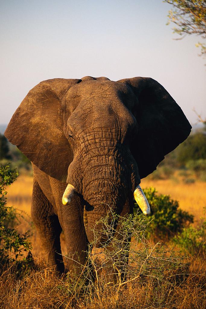 e05e1f6d6cc3 Happy World Elephant Day! xo We cannot afford to lose Elephants.
