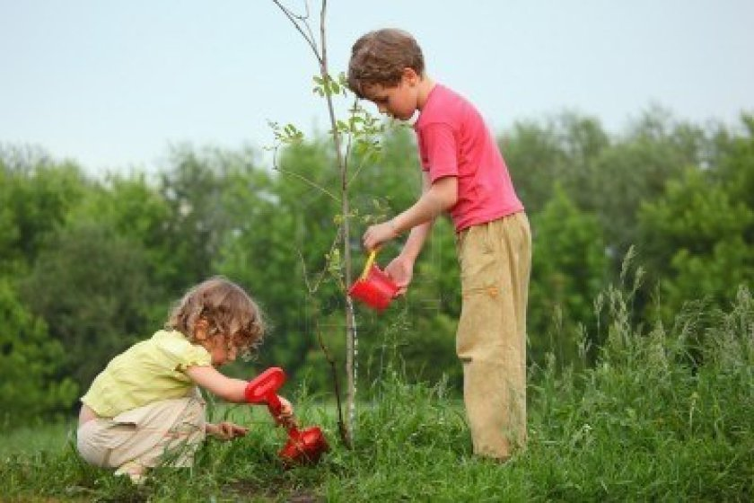 7837753-kids-plant-the-tree