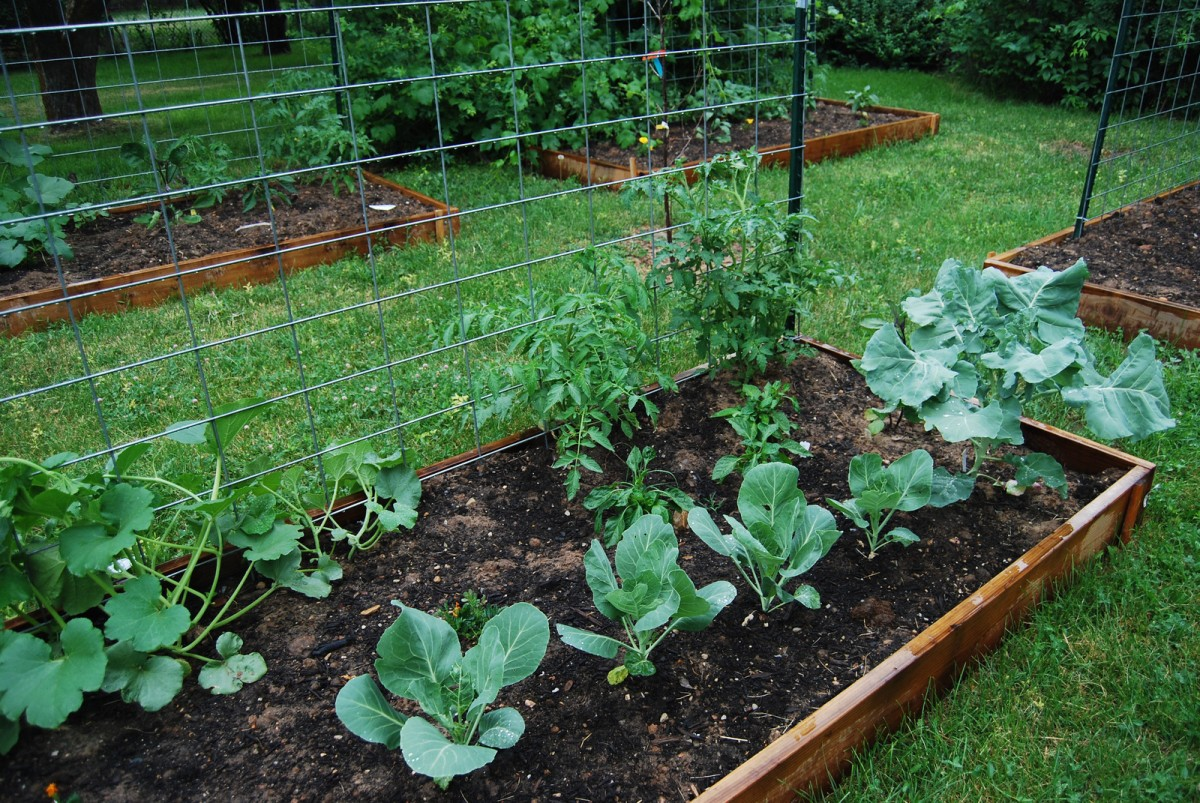 Growing Together How To Start A Community Garden