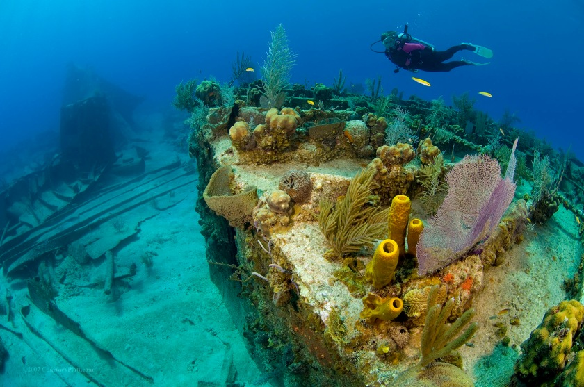 The Balboa Shipwreck and reef is located in 10 to 30 feet of water immediately in front of the cruise ship landing and will be completely removed by dredging operations if the cruise berth goes ahead as planned. Many consider the Balboa to be both, the number one and number two of the top ten dive sites in Grand Cayman (Night dive is #1, day dive is #2).