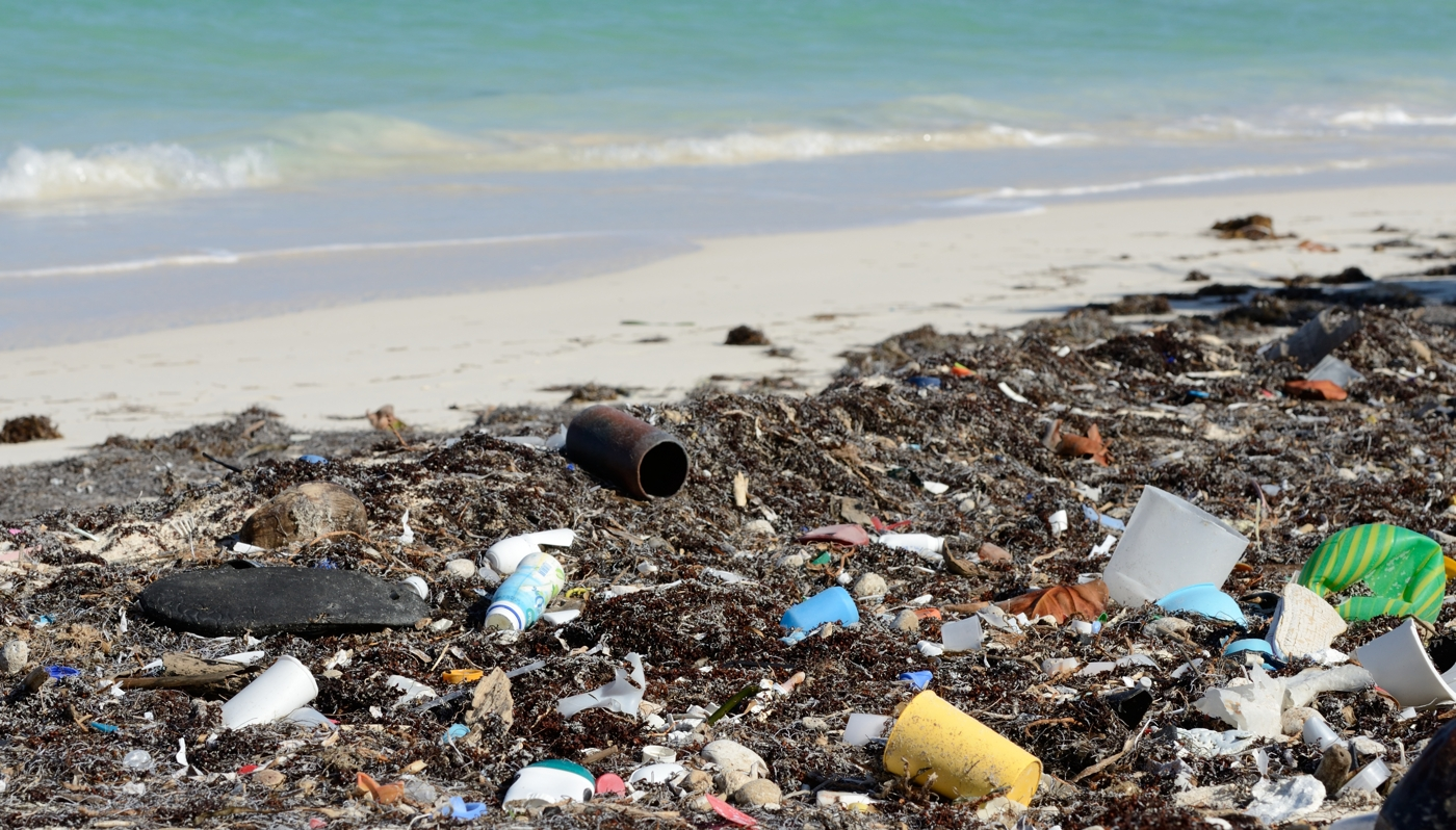 biochemistry lab report example Sources of Beach Pollution