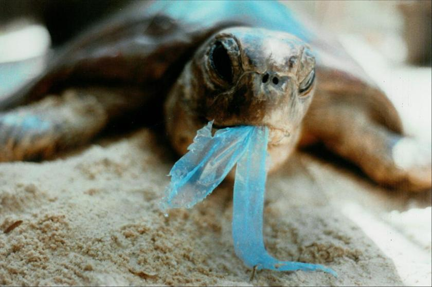turtle-eating-plastic