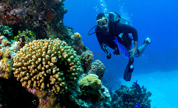 Meet The Eco Divers