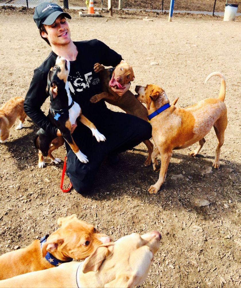 ian_dogs