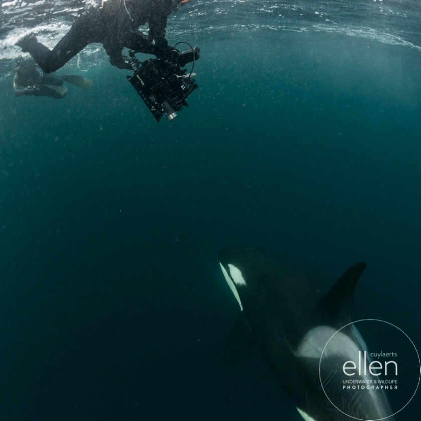 orca-michael
