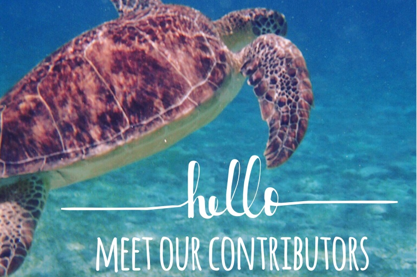 turtle-eco-chic-cayman