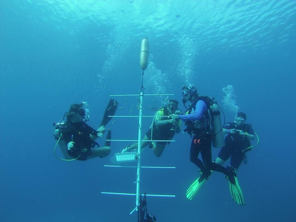 cayman islands  coral nursery conservation program