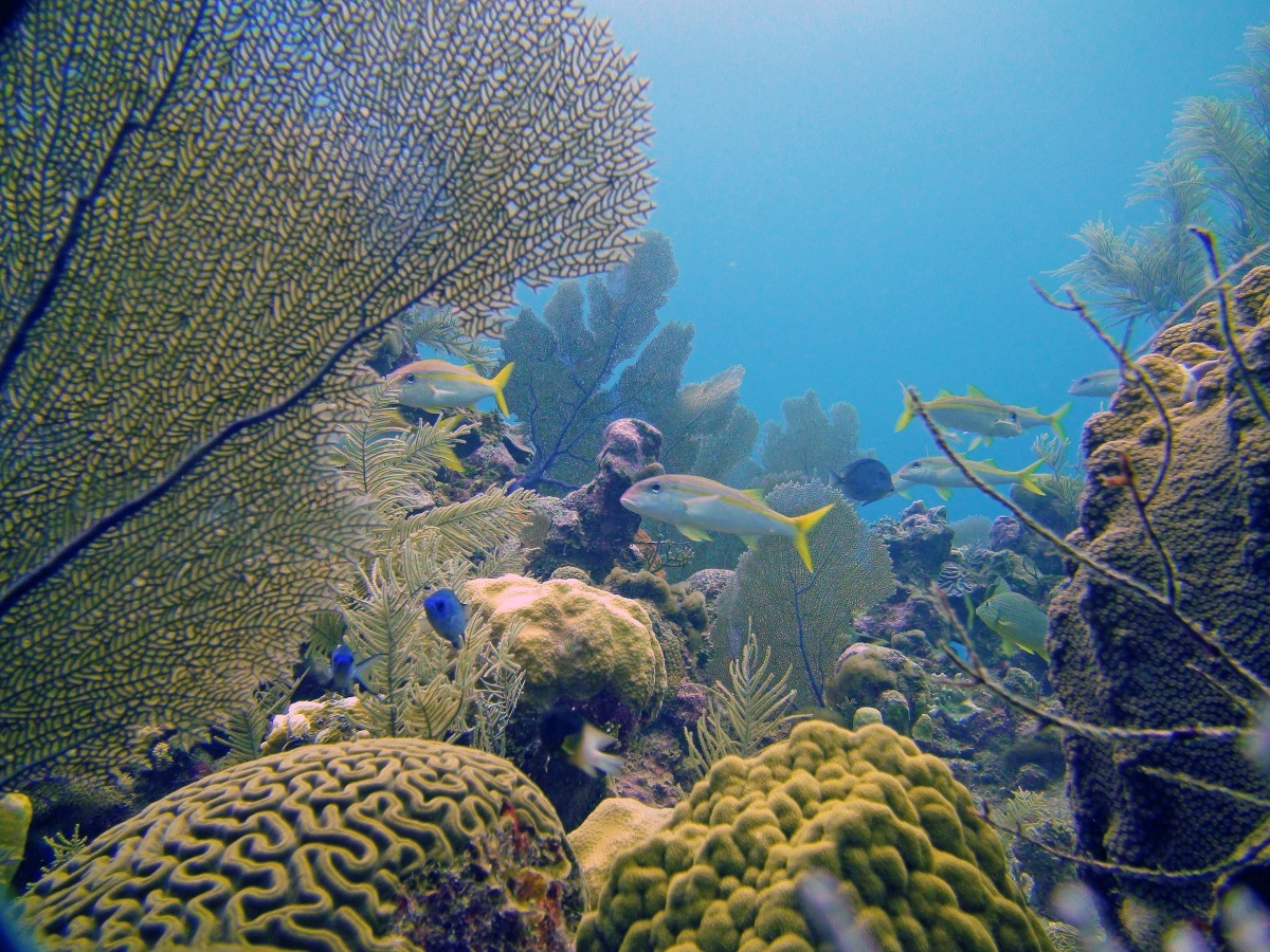 Cayman Islands Coral Watch Programme